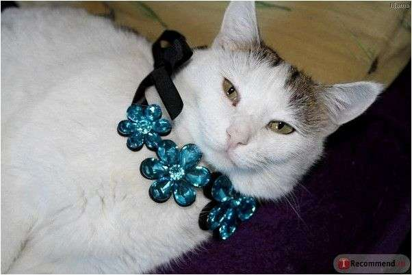 Колье Aliexpress Hot Flower Crystal Gem False Collar Choker Chain Statement Necklaces & Pendants New 2014 Fashion Jewelry Women Wholesale N111