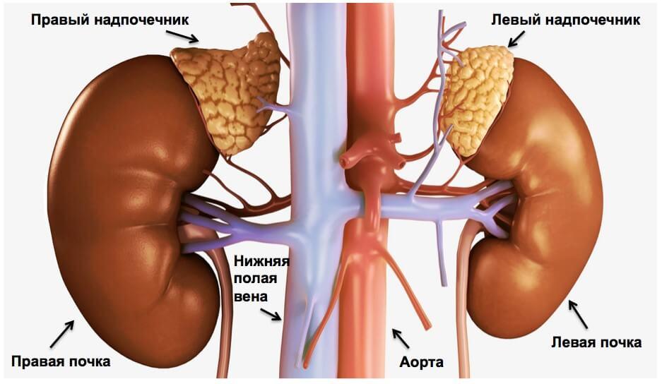 Рак надпочечников